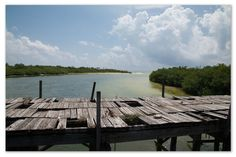 riserva2 Travel Vlog, Mexico Travel, Garden Bridge, Outdoor Structures, Park, Outdoor Decor, Parks