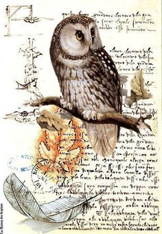 Just another owl on branch - with feather on background of an old letter: