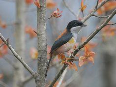 Eaglenest Wildlife Sanctuary - in Arunachal Pradesh, India