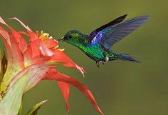 Beautiful Creatures – 20 Humming Bird Close Ups