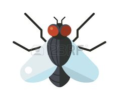 bug: House fly insect and cartoon black fly insect. Insect hairy legs biology housefly. Bluebottle fly insect species calliphora vomitoria bug animal nature macro pest with big eyes hairy legs flat vector. Illustration