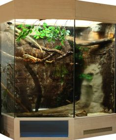 But would be great for a Water Dragon as well. Iguana Cage, Iguana Pet, Reptile House, Reptile Cage, Snake Terrarium, Snake Enclosure, Green Iguana, Water Dragon, Vivarium
