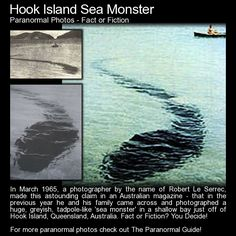 "Hook Island Sea Monster - Fact or Fiction?   ""Le  Serrec then, apparently, summoned the courage to get underwater in order to film the creature, and upon doing so found it was substantially larger than first suspected, it now thought to be at least  70-80ft long. Thinking it might be dead, he approached closer and it is  then that the creature opened its huge mouth and started moving towards him…""   Read more here: http://www.theparanormalguide.com/blog/hook-island-sea-monster"