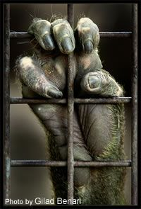 Whether in zoos, circuses, animal shows or marine parks, wild animals suffer physically and mentally from the lack of freedom that captivity imposes.   See more photos by Gilad at: http://gilad.deviantart.com/gallery/