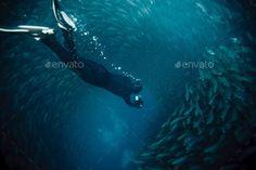 free diving into a sardine ball