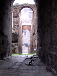 cats in Rome, Colosseum