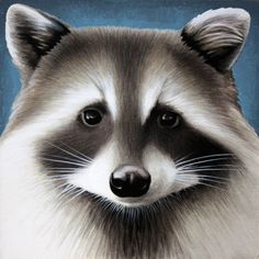 By Leon Loucheur for #SentientCity #raccoon
