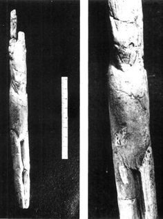 This Venus figure from Las Caldas Cave has the head of an ibex and the legs and genitals of a female human. Some think it is not meant to be a venus, but is part of an atlatl, a spear thrower. Human Body Proportions, Spear Thrower, Male Horse, Art Pariétal, Paleolithic Art, Homebrew Recipes, Female Profile, First Tooth, Prehistory