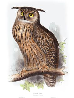 EAGLE OWL (bubo maximus) by EDWARD LEAR  for John Gould's Bird of Europe. Imaged dated 1837