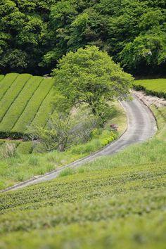 田園風景 ~柳生方面~ : 四季折々~奈良大和路~