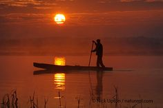 Polish punt at Dawn on the Biebrza Marshes, copyright Nick Upton. Nick has lived in Box for 21 years, using Wiltshire as a base and as inspiration for his work at home and abroad. Museum Art Gallery, Dawn, How To Find Out, National Parks, Wildlife, Polish, Culture, Sunset, Box