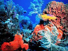 Moluscos - Papel de Parede Grátis para PC: http://wallpapic-br.com/oceano-e-mar/moluscos/wallpaper-11348