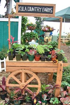 Kula Country Farms, a great place for fresh produce in Upcountry Maui