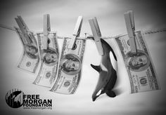 Spiegl & Visser (2015) White Paper (whale laundering) - Free Morgan Foundation