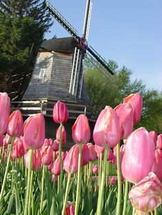 Pella Tulip Festival (have never gotten around to going, maybe this year)