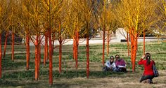 Painted Trees - Chicago