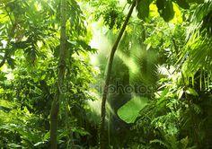 Pobieraj - Tropikalny Las, drzewa, w słońcu i deszczu — Obraz stockowy #12300281