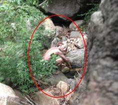 Que coisa rapaz! Turista flagra criatura misteriosa ao sair para urinar em camping na China