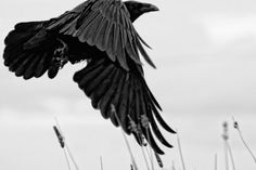 http://raven-steals-the-light.tumblr.com/post/129316657774