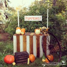 Chelsie Renae Photography  Fall Mini Session set up!