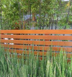 modern plantings along a wood  fence -