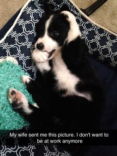 Border Collie Puppy | Border Collies | Pinterest | Border Collies ... Bordre Bad Bilder