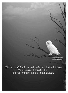 "Research on white witch— ""snow is coming. I can smell it"" Magick Spells, Wiccan, Wicca Witchcraft, Witch Quotes, Owl Quotes, Life Quotes, Witch Spell, White Witch, Vampire"