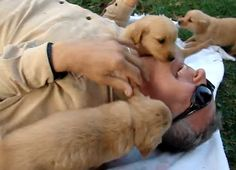 Adorable puppy tackle (VIDEO)