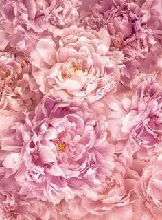 Dvoudílná vliesová fototapeta Růžové květy, 184x248cm, XXL2-009
