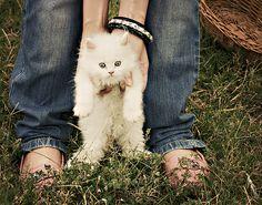 Cute little white cat. :)