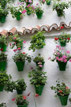 Geraneos de colores adornando patio en Andalucia.
