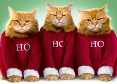 28 Best Christmas Cats Wallpapers Images Xmas Natal Christmas Cats
