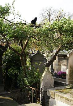 The cats of Montmartre Cemetery, Paris, France