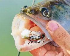 снасточка для ловли на мёртвую рыбку своими руками: 12 тыс изображений найдено в Яндекс.Картинках