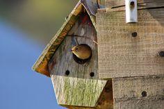 Little bird saying good morning!