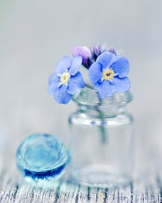 Forget Me Not 8x10 Print by ARobertsphotos on Etsy, $20.00