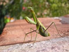 Insects And Bugs | ... insects. However, they don't always tell what these insects are