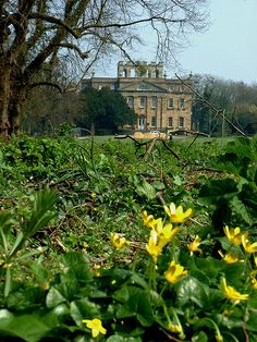 Across the buttercups there was a majestic house... Kings Weston House, Bristol