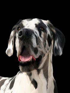 I'm Great Dane, not Dalmatian!!