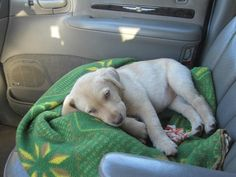 """I know I'm supposed to be the co-pilot but I'm just so sleepy."" 
