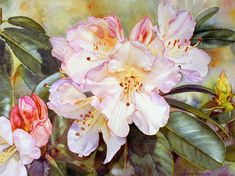 Rhododendron Unique - Watercolor Flower Painting by Susan Harrison-Tustain