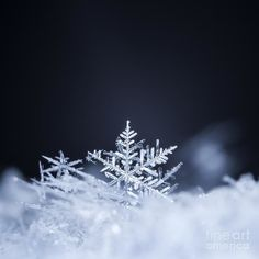 Photographic Print: Natural Snowflakes on Snow, Photo Real Snowflakes during a Snowfall, under Natural Conditions at Lo by : Winter Wallpaper, Christmas Wallpaper, Snowflake Wallpaper, Snowflake Photography, Winter Nature Photography, Snow Photography, Broken Dreams, Fractal, Winter Pictures