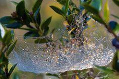 Misty web (WaterBugsPics) Tags: mist wet water spider web dew jewels waterdrops