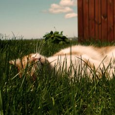 Kitty bliss
