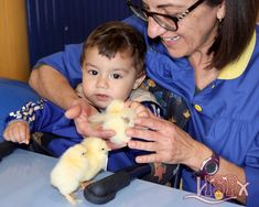 The children of P0 and P1 #babygardenelpeixet enjoyed the birth of the chicks on the occasion of Science Week in #ColegiosISP. #enriquecimientocurricular #enjoylearningISP