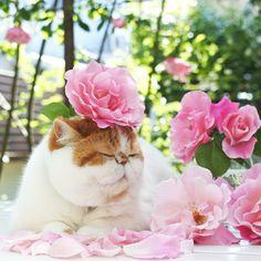 "2,112 Likes, 63 Comments - Maki (@nikoandpoko) on Instagram: ""* Niko❤︎Sleeping Beauty😴👑⇒Bad girl👻🙈 . お姫様から一転… 最後が1番ニコ姉さんらしいかも😝 . . . #ニコさんと花💐#rose#🌹…"""