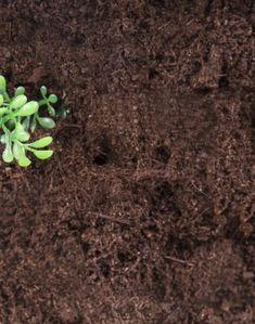 Home And Garden, Plants, Gardens, Tv, Outdoor Gardens, Television Set, Plant, Garden, House Gardens