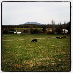 Long Hollow Ranch