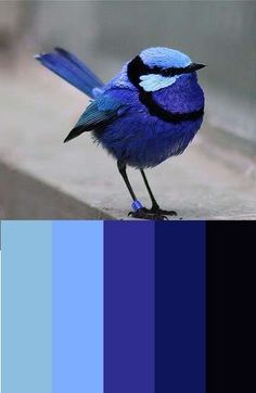 Color Inspiration  Mr. Blue Bird colors from Colourlovers