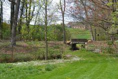 Wild Garden of Winterthur